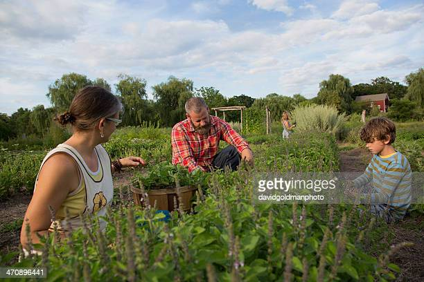 Family working together on herb farm