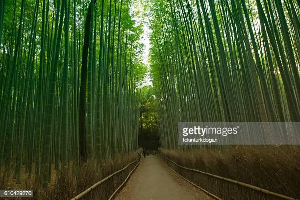 famous Arashiyama bamboo groove forest at sagano kyoto japan
