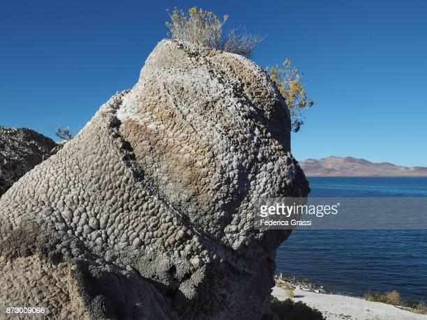 Famous Popcorn Rock, Pyramid Lake, Nevada