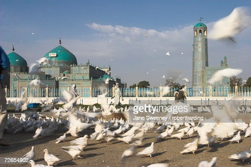 Famous white pigeons at the Shrine of Hazrat Ali, founded by the Seljuks in the 12th century, Mazar-I-Sharif, Afghanistan, Asia