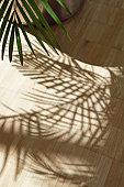 Fan palm tree shadowed on wooden floor