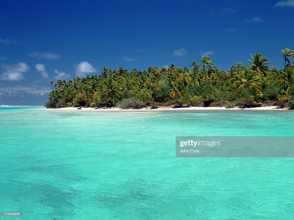 Fan palm trees on beach : Stock Photo