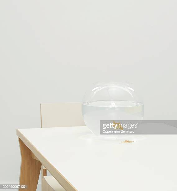 Fan-tail goldfish in bowl on table
