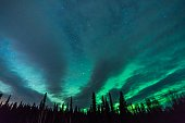 Shot in the interior of Alaska from Birch Lake, purplish clouds and green aurora are fanned out behind the trees with clear starry skies in the background
