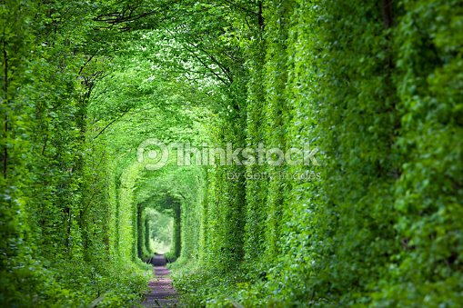 Fantastic Real Tunnel of Love, green trees and the railroad