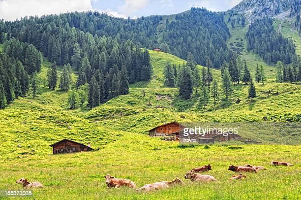 Farm at Schoenach valley in Tirol (European Alps Austria)