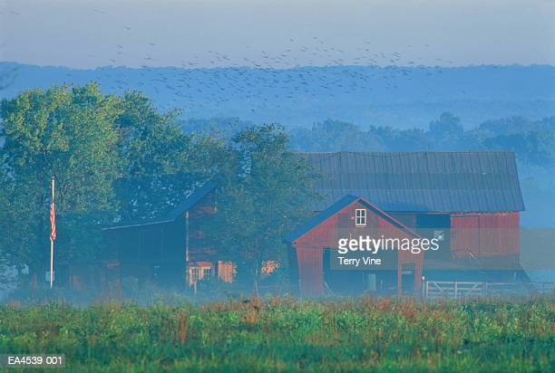 Farm buildings amongst trees in early morning mist, USA