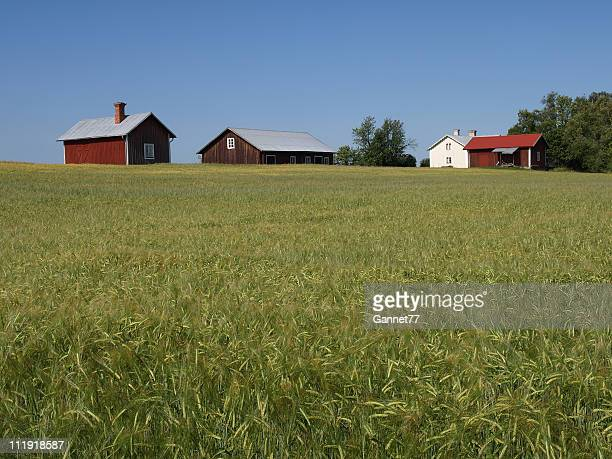 Farm Buildings and Barley Field