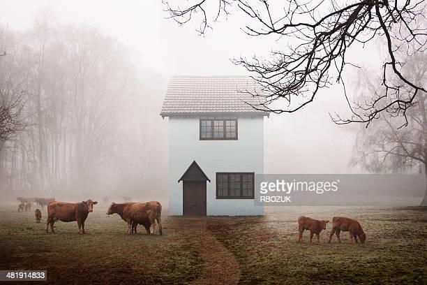 Farm Cottage in Field