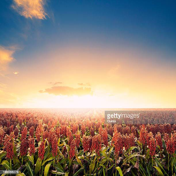 Farm field at sunrise