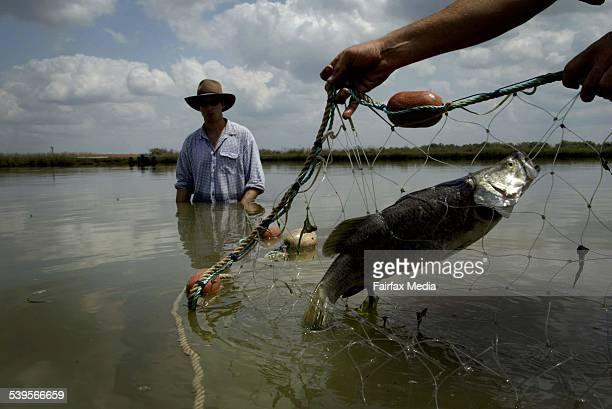 A farm fresh barramundi is pulled from a pond at Humpty Doo south West of Darwin Taken 1st October 2004 AGE BUSINESS Picture by GLENN CAMPBELL