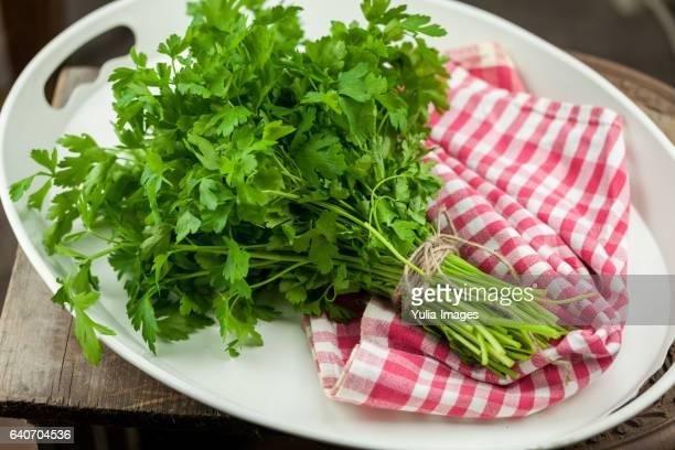 Farm fresh bunch of green parsley on a plate