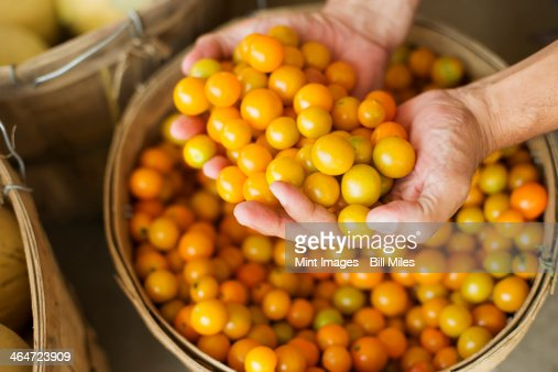 A farm growing and selling organic vegetables and fruit. A man holding a bowl of basket of freshly picked tomatoes.
