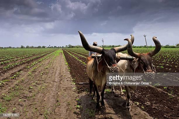 Farm in Jetpur