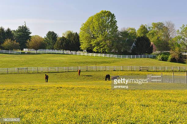 Farm im Frühling