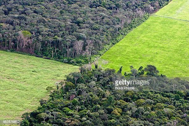 Farm management soy plantation in Amazon rainforest near Santarem deforestation for the agribusiness economic development creating environmental...