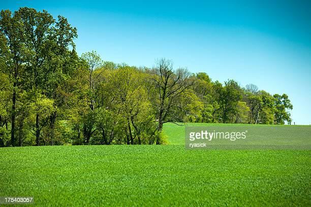 Farm Wiese und Baum Linie In den Frühling