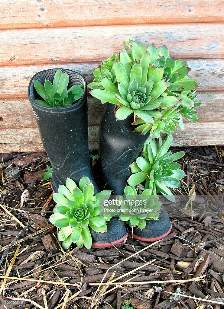 Farm muck boot planters