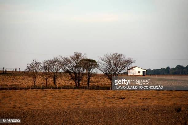 Farm of agriculture in the region of Londrina in Brazil