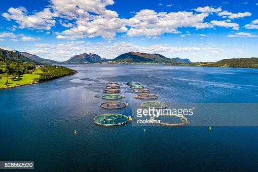 Farm salmon fishing : Stock Photo