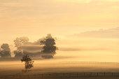 Farm shrouded in mist, dawn