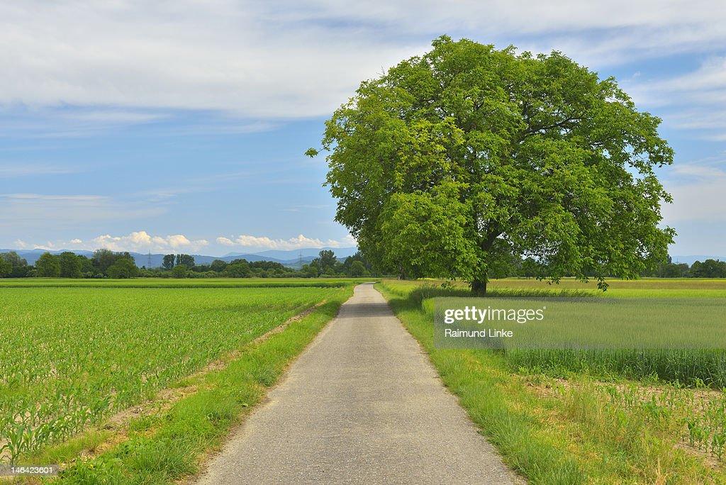 Farm Track : Stock Photo