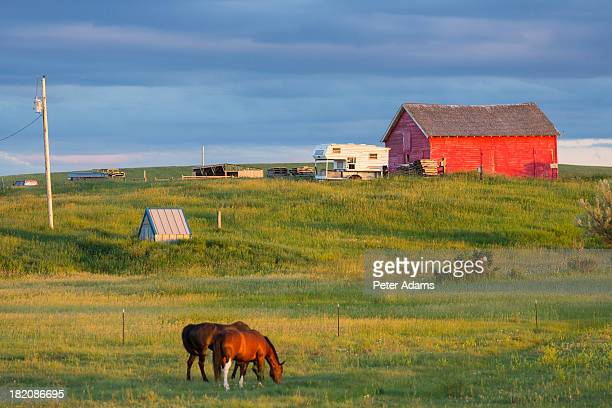 Farm With Barn & Horses, Northern Montana, USA