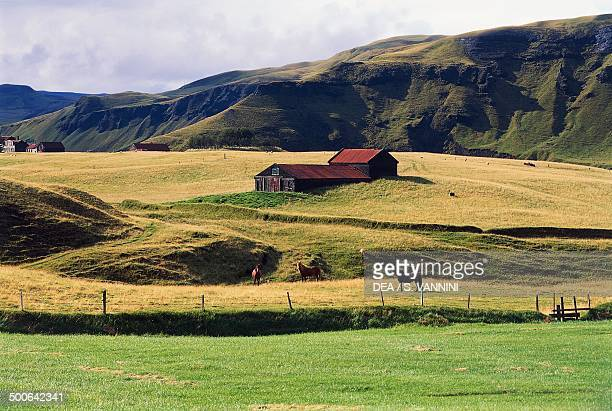 Farm with horses grazing Kirkjubaejarklaustur VesturSkaftafell Iceland