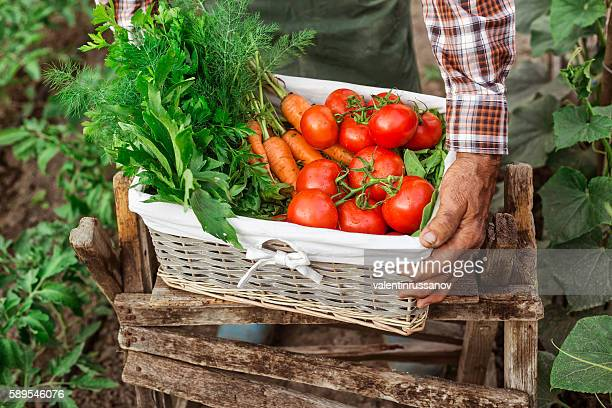 Farm worker carrying a crate full of fresh vegetables