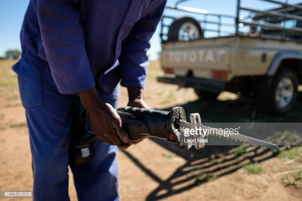 A farm worker changes the blade on the electric saw used to trim horns at the ranch of rhino breeder John Hume on October 16 2017 in the North West...