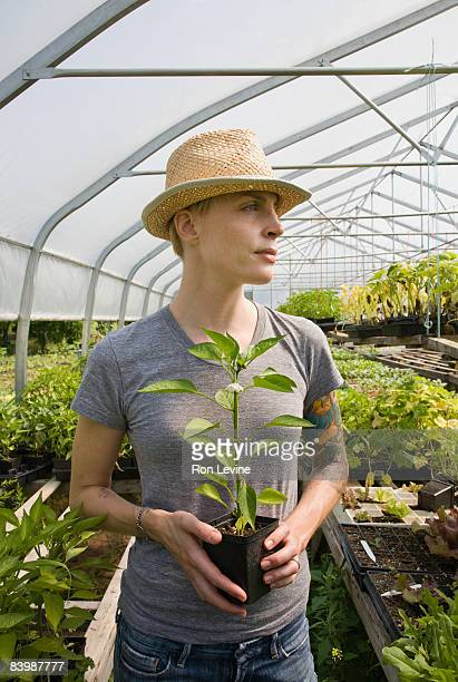 Farm worker holding a young pepper plant