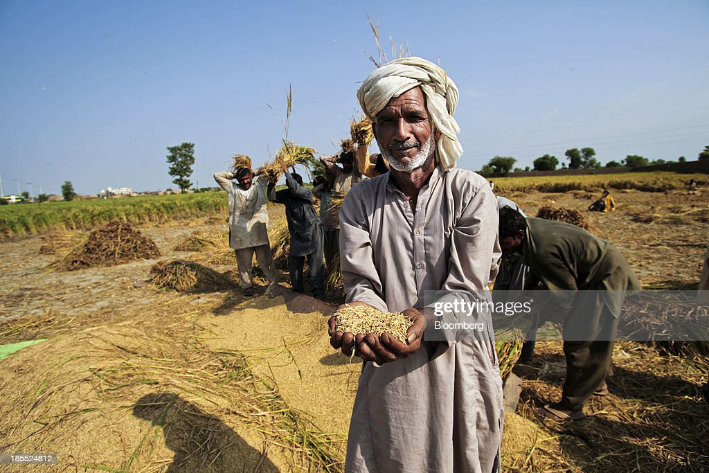 A farm worker holds a handful of harvested rice grains for a photograph in the district of Chiniot in Punjab, Pakistan, on Sunday, Oct. 13, 2013. Prime Minister Nawaz Sharifs four-month-old government is struggling to revive the $231 billion economy crippled by chronic energy shortages and a spike in violence from a Taliban insurgency in the northwest. Photographer: Asad Zaidi/Bloomberg via Getty Images