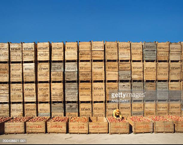 Farm worker inspecting apples in crate