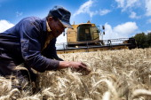 A farm worker inspects wheat ears before harvesting on a largescale wheat farm in Timau near Nanyuki Kenya on Friday Aug 19 2011 The cost of corn...