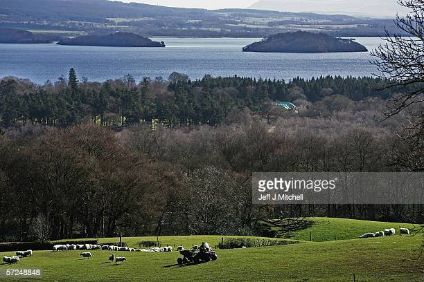 A farm worker is seen feeding sheep at Shantron farm on April 4 Glasgow ScotlandThe traditional spring lambing season is under way with hundreds of...