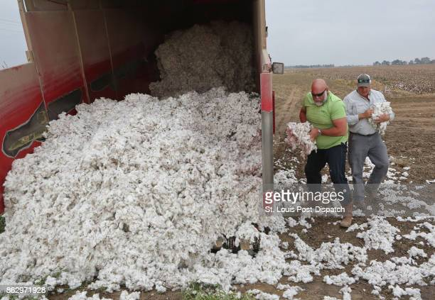 Farm worker Mikel Wilson and farmer Jason Bean load loose cotton into a truck on Wednesday Oct 12 at Bean's farm near Peach Orchard Mo The cotton was...