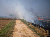 IND: Toxic Air in Delhi Fueled By The Burning Of Rice Fields That India Doesn't Need