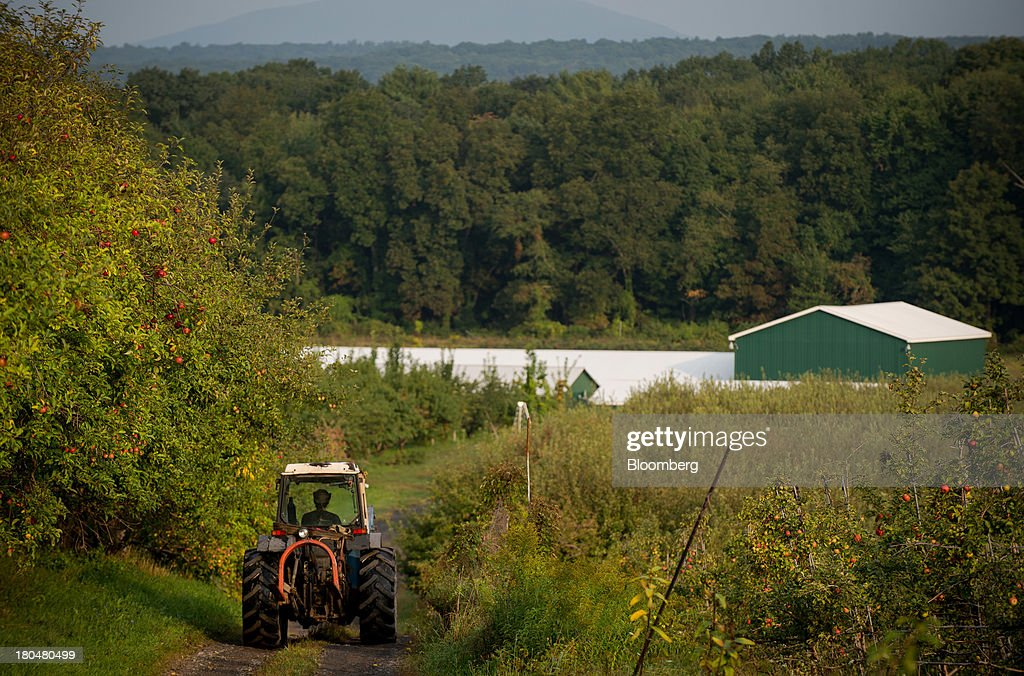 Farm worker Oscar Herta drives a tractor with a load of apples at Stone Ridge Orchard in Stone Ridge, New York, U.S., on Thursday, Sept. 12, 2013. With apple harvest now officially underway across the state of New York, nearly 700 apple growers are expected to pick about 32 million bushels by the time harvest concludes in November, according to New York Apple Association (NYAA) reports. Photographer: Craig Warga/Bloomberg via Getty Images