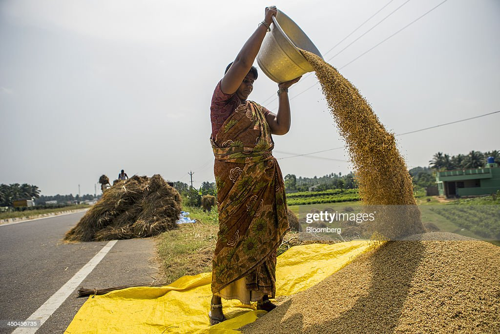 A farm worker pours rice grain from a bowl onto a pile during a crop harvest near Thimmapuram, Tamil Nadu, India, on Thursday, Nov. 14, 2013. Record onion prices and the soaring cost of rice and coriander are frustrating Reserve Bank of India Governor Raghuram Rajans battle to curb inflation while supporting growth in Asias third-largest economy. Photographer: Prashanth Vishwanathan/Bloomberg via Getty Images