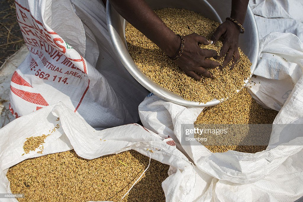 A farm worker sorts rice grains during a crop harvest in paddy fields near Thimmapuram, Tamil Nadu, India, on Thursday, Nov. 14, 2013. Record onion prices and the soaring cost of rice and coriander are frustrating Reserve Bank of India Governor Raghuram Rajans battle to curb inflation while supporting growth in Asias third-largest economy. Photographer: Prashanth Vishwanathan/Bloomberg via Getty Images