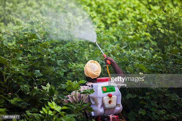 A farm worker sprays cotton plants with pesticides on the farm of Jarnail Singh in Jajjal village Punjab India on Wednesday Aug 28 2013 The Green...
