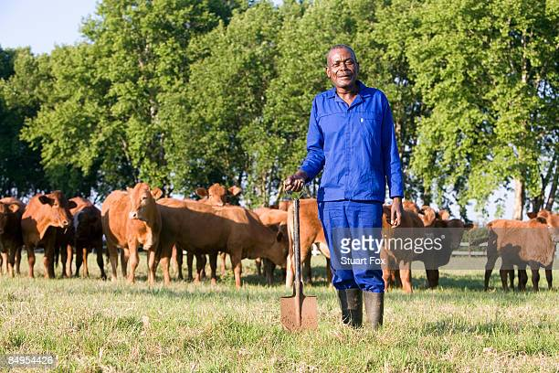 Farm worker stands with a spade in front of a herd of cattle, Midlands, KwaZulu Natal Province, South Africa