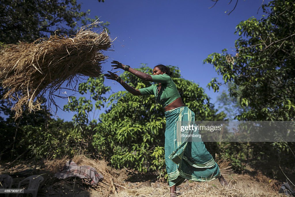 A farm worker throws a bundle of rice to a co-worker using a threshing machine, unseen, in Kainad, Maharashtra, India, on Saturday, Dec. 21, 2013. The construction of 600,000 kilometers (373,000 miles) of country roads, addition of 327 million rural phone connections and a rise in literacy to record levels since Prime Minister Manmohan Singh took office in 2004 has helped double the growth rate of Indias food output. Photographer: Dhiraj Singh/Bloomberg via Getty Images