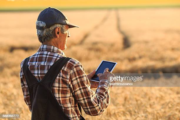 Farm worker using digital tablet on wheat field