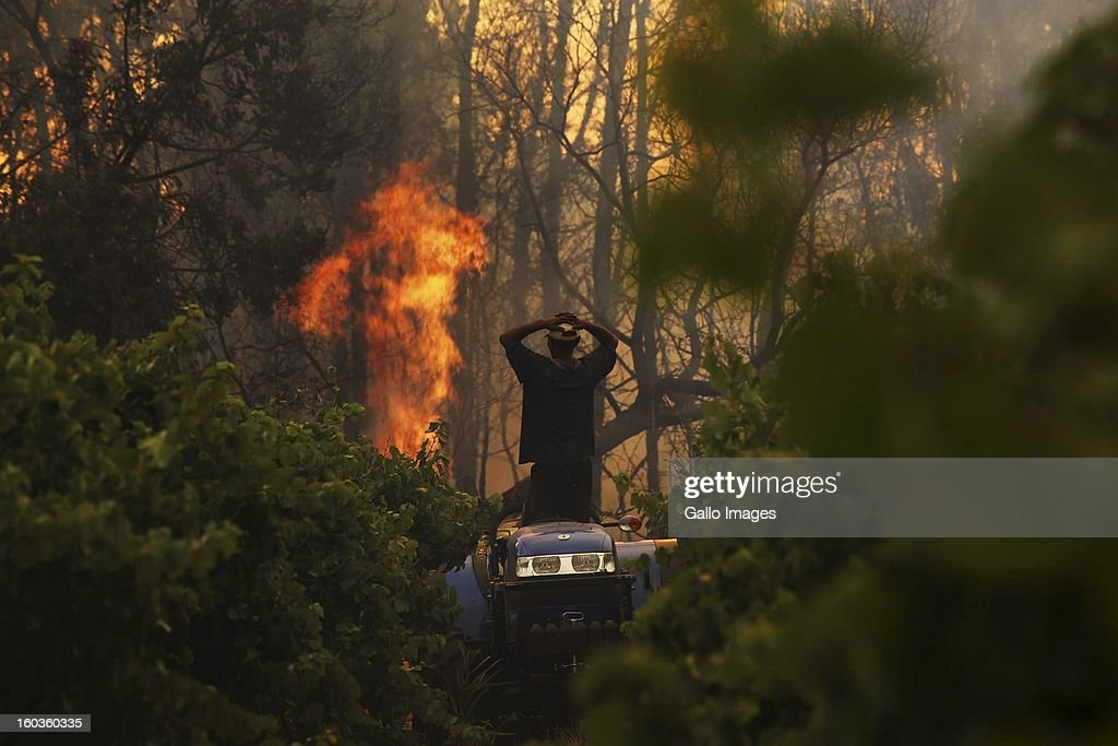 A farm worker watches from a tractor as a fire rages through De Hoop farmr on January 29, 2013, in Paarl, South Africa. No firemen were present as the veld fire swept through the entire Boland region in the Western Cape.
