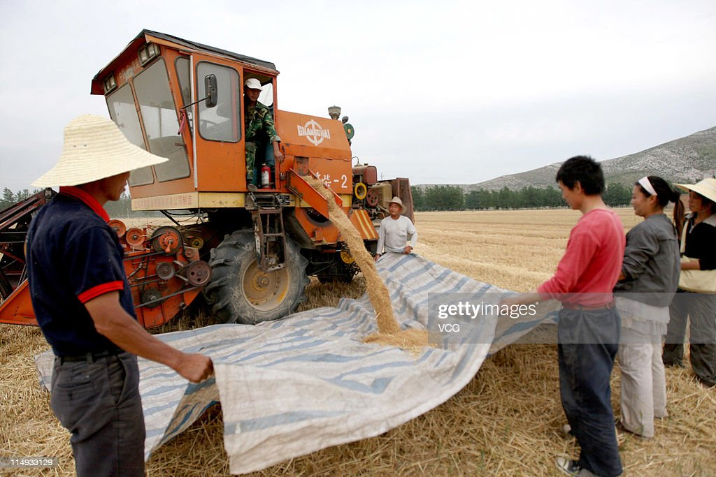 Farm workers empty grain from a combine harvester in a wheat field on May 29, 2011 in Huaibei, Anhui Province of China. Anhui province will put 125,000 combine harvesters into this wheat harvest season, and it's estimated that the work will be completed basically in 10 days.