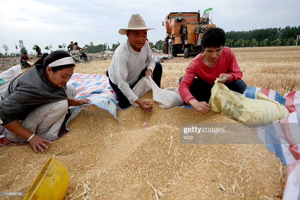 Farm workers harvest wheat at a field on May 29, 2011 in Huaibei, Anhui Province of China. Anhui province will put 125,000 combine harvesters into this wheat harvest season, and it's estimated that the work will be completed basically in 10 days.