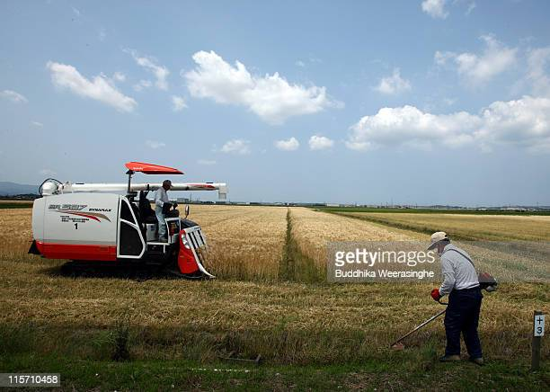 Farm workers harvest wheat with a combine harvester during wheat harvesting season at Awara on June 9 2011 in Fukui Japan Japan has historically been...