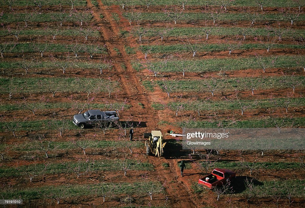 Farm workers in flowering peach orchard, Georgia : Stock Photo