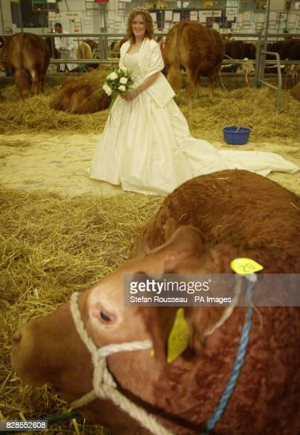 Farm workers Sally Burnett from Luston near Leominster Herefordshire prepare to have her marriage to colleague Neil Lloyd blessed at the agricultural...